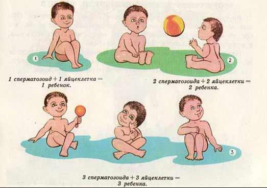 Мама снесла яичко у папы есть сперматозоиды у мамы есть яичники откуда дети берутся
